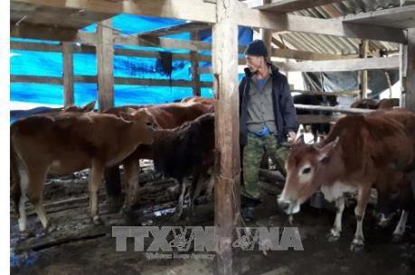 Lạng Sơn chủ động phòng chống dịch bệnh cho gia súc, gia cầm