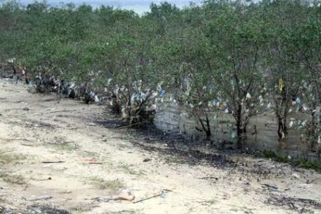 """Rác """"bức tử"""" rừng ngập mặn nguyên sinh ven đê sông Lam"""