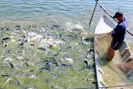 Sản lượng khai thác, nuôi trồng thủy sản 11 tháng tăng