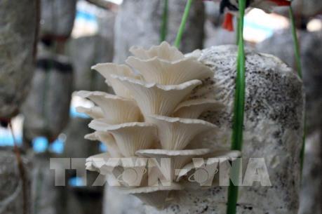 Khởi nghiệp từ niềm đam mê - Bài 1: Tỷ phú từ mô hình nấm trong phòng thí nghiệm