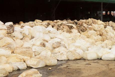 Gây ô nhiễm môi trường, nhà máy chế biến mủ cao su ở Kon Tum bị dừng hoạt động
