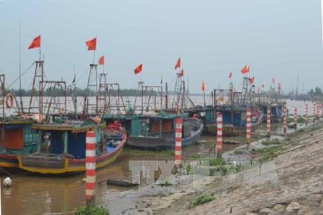 Thái Bình dành gần 200 tỷ đồng nâng bãi ổn định đê biển
