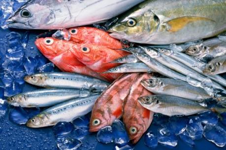 """Đầu bếp hàng đầu châu Âu nói """"Không"""" với hải sản đánh bắt bằng xung điện"""