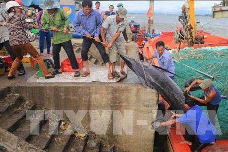 Quảng Trị dành hơn 210 tỷ đồng vốn tín dụng khắc phục sự cố môi trường biển