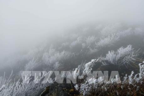 Sa Pa (Lào Cai) rét nhất từ đầu đông, nhiệt độ còn 1,3 độ C