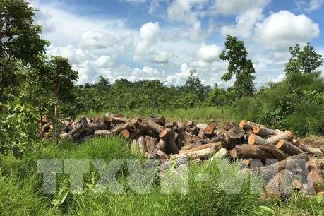 Kon Tum: Phát hiện vụ phá rừng ở vùng giáp ranh