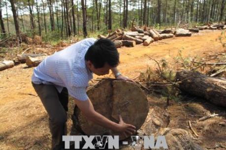 Cần sớm điều tra, xử lý nghiêm việc phá rừng cộng đồng ở Đắk Nông
