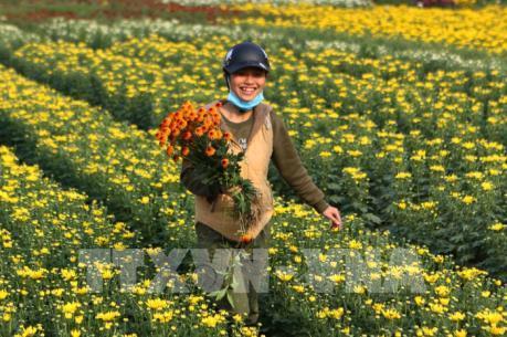 Làng hoa hối hả ngày cận Tết
