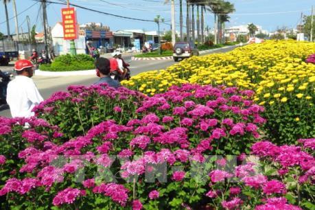 Nhộn nhịp các chợ hoa Xuân ở An Giang 