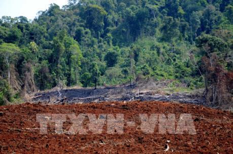 Vụ phá rừng tại Quảng Sơn, Đắk Nông: Kiến nghị xử lý trách nhiệm chủ rừng