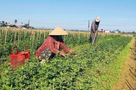 Agribank hỗ trợ phát triển kinh tế vùng gò đồi Thừa Thiên - Huế