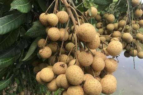Từ 1/4, hoa quả Việt Nam xuất sang Quảng Tây, Trung Quốc sẽ bị truy xuất nguồn gốc