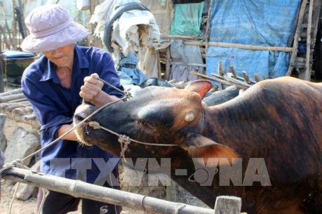 Ninh Bình đẩy mạnh tiêm phòng vắc xin cho đàn vật nuôi