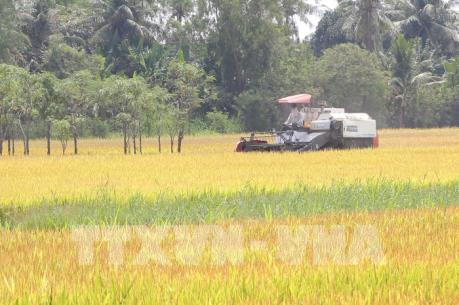 Tạo liên kết bền vững trong sản xuất và tiêu thụ lúa gạo