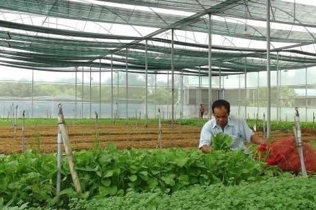 Bà Rịa-Vũng Tàu sắp xếp các dự án đầu tư nông nông nghiệp công nghệ cao