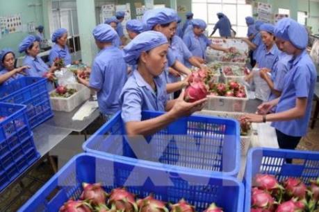 Trăn trở nông sản Việt Nam và bài toán xuất khẩu