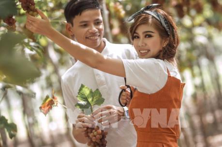 Tour du lịch tham quan vườn nho Thái An – Ninh Thuận
