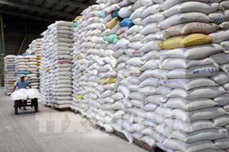 Xuất khẩu gạo lại lo bị ép giá khi vào chính vụ Đông Xuân