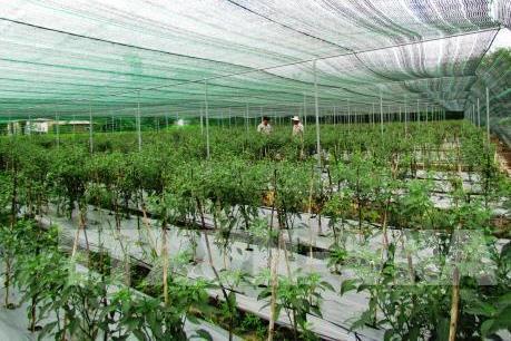 Tp. Hồ Chí Minh hỗ trợ khởi nghiệp vào lĩnh vực nông nghiệp công nghệ cao