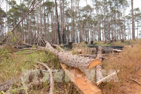 Vi phạm về bảo vệ và phát triển rừng giảm mạnh
