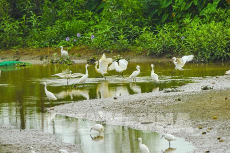 Khám phá vẻ đẹp của đảo cò Gia Lạc