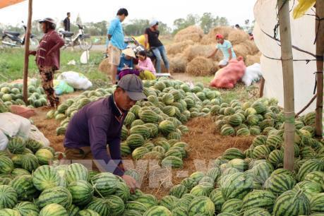"""Nông sản Việt bao giờ hết… phải """"giải cứu""""?"""