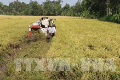 An Giang tăng khả năng cung ứng nguồn nguyên liệu gạo chất lượng cao