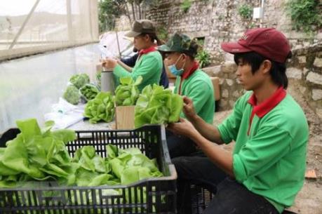 Kiên Giang ứng dụng công nghệ cao trong nông nghiệp