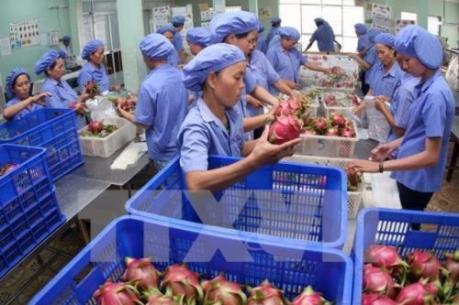 Đẩy mạnh tiêu thụ nông sản: Phát triển mô hình liên kết doanh nghiệp và hợp tác xã