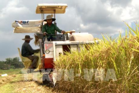 """Giải bài toán cạnh tranh của ngành gạo: Nhìn từ chuyện """"sốt"""" IR50404 đến… """"ế"""" nếp"""