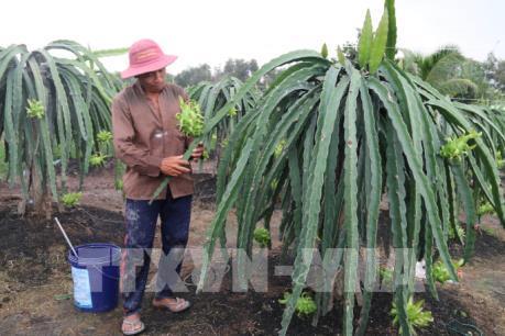 Đẩy mạnh tiêu thụ nông sản: Tiền Giang với triển vọng xuất khẩu trái cây