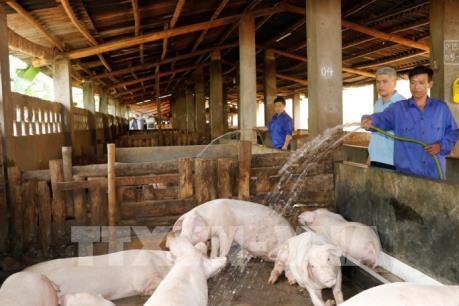 Kinh nghiệm chăn nuôi từ các doanh nghiệp FDI