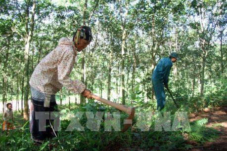 Làm thế nào để ngành cao su Việt Nam tận dụng tốt các cơ hội thị trường?