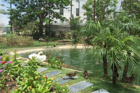 Trải nghiệm vườn chim nhiệt đới tại FLC Sầm Sơn