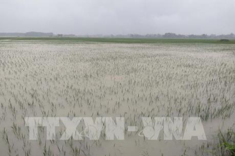 Thanh Hóa có hơn 13.000 ha lúa bị ngập úng do mưa lớn