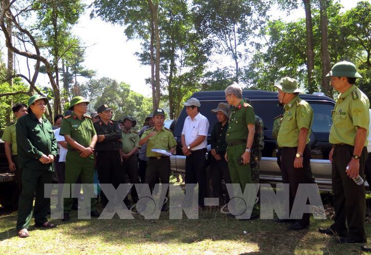 Cận cảnh hiện trường 43 ha rừng tự nhiên ở Bình Định bị xóa sổ - hình 0