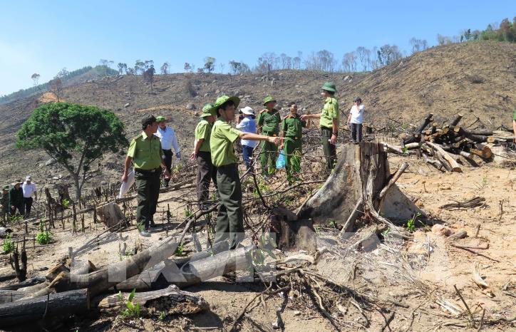 Cận cảnh hiện trường 43 ha rừng tự nhiên ở Bình Định bị xóa sổ - hình 1