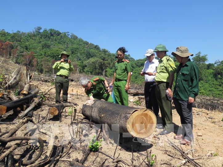 Cận cảnh hiện trường 43 ha rừng tự nhiên ở Bình Định bị xóa sổ - hình 3