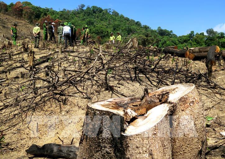 Cận cảnh hiện trường 43 ha rừng tự nhiên ở Bình Định bị xóa sổ - hình 4