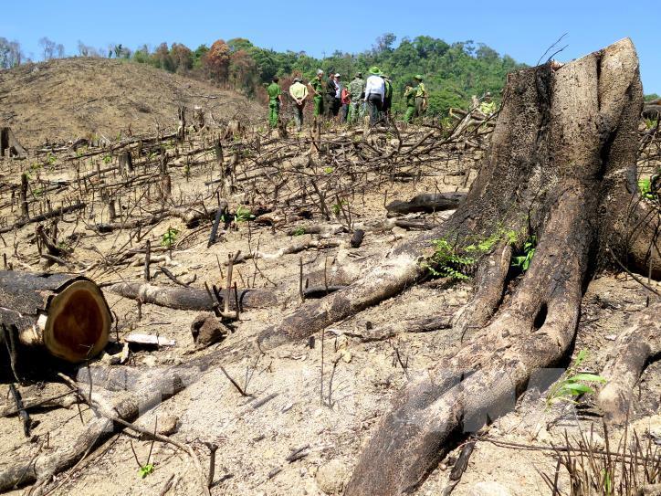 Cận cảnh hiện trường 43 ha rừng tự nhiên ở Bình Định bị xóa sổ - hình 5