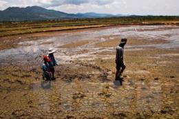 Biến đổi khí hậu ở ĐBSCL (Bài 2): Làm gì để giảm thiểu thiệt hại do hạn mặn?