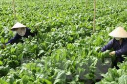 Sản xuất nông nghiệp công nghệ cao: Chú trọng nhu cầu thị trường