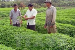 Phát triển nông nghiệp hữu cơ thích ứng với biến đổi khí hậu