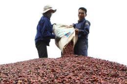 Vì sao nông sản Việt vẫn thiếu tính cạnh tranh?