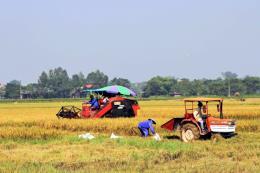 Huyện Phú Thiện (Gia Lai) chú trọng xây dựng các mô hình cánh đồng lớn