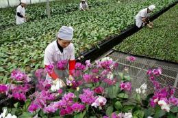 Phó Thủ tướng chỉ đạo thúc đẩy sản xuất nông nghiệp và hỗ trợ dân cư vùng chuyển dân