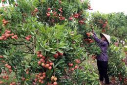 Thương hiệu nông sản khẳng định từ chất lượng