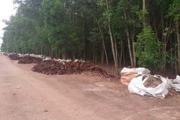 Đồng Nai: Điều tra, làm rõ việc đổ hàng ngàn tấn chất thải giữa rừng tràm