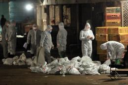 Trung Quốc: Tỉnh Cát Lâm ghi nhận ca nhiễm H7N9 đầu tiên trong năm 2017