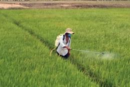 Chi phí vụ Hè Thu tăng khiến nông dân lo lắng